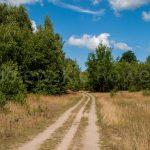 Wielewska_trasa_03